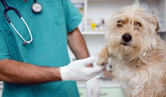 Clínica Veterinaria Pets